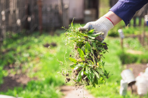 6 Neat Tricks to Keep Your Garden Spotlessly Clean