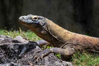Secrets About Reptiles That Will Definitely Surprise You